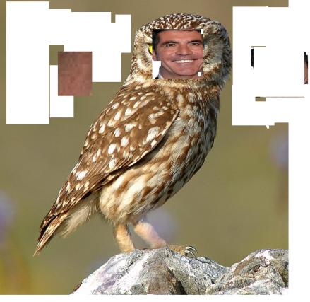 simon-owl.png